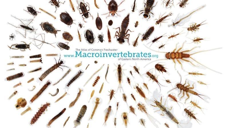 Macroinvertebrates.org Webinar